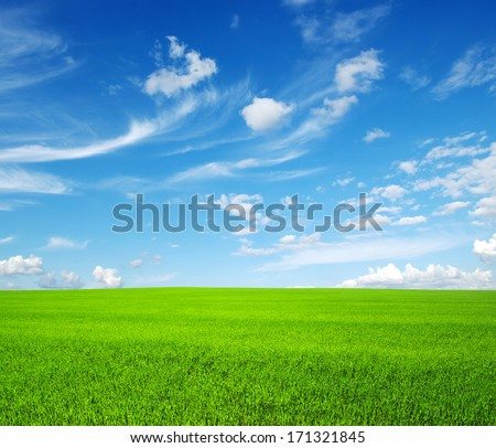 green grass field and bright blue sky