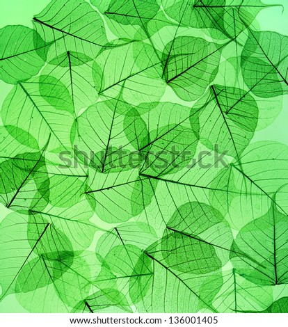 green leaves surface  texture - stock photo