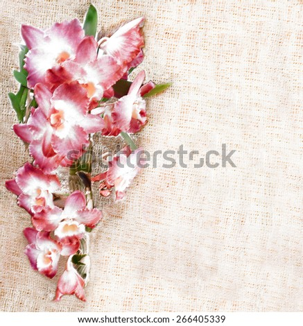 Greeting floral card  with pink orchid flowers on grunge striped beige burlap background  - stock photo