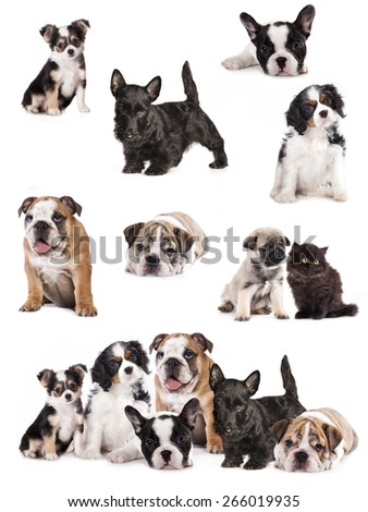 Group of  puppies sitting in front of a white background - stock photo