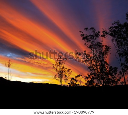 Gum tree silhouette with brilliant Australian autumn sunset and radiatus clouds - stock photo