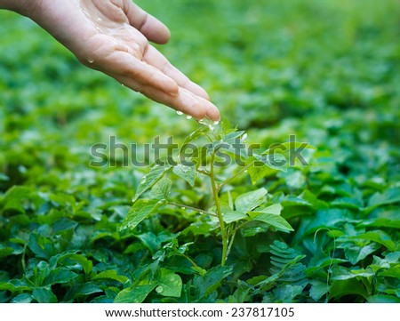 hand watering pouring on green plant  - stock photo