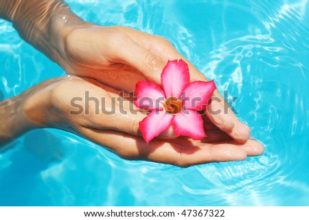 Hands holding  frangipani flowers with  blue water in background - stock photo