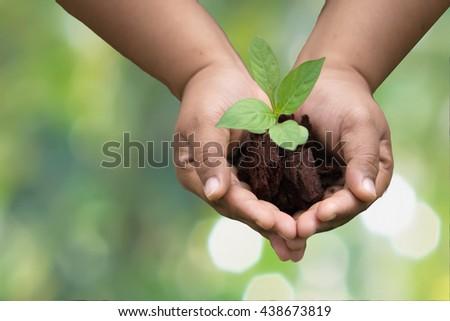 Hands holding green sapling                               - stock photo