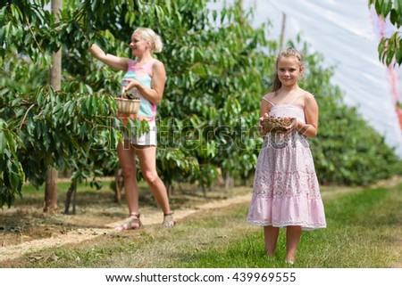 Happy family picking cherries in orchard - stock photo