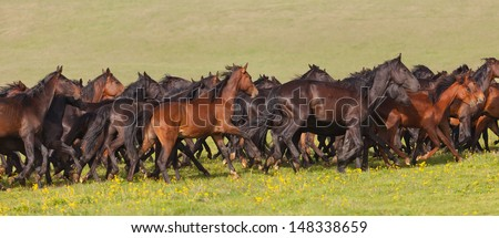 Herd of horses on a summer green pasture - stock photo