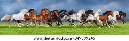 Herd of horses on summer pasture, banner for website - stock photo