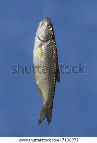 holding a fish - stock photo