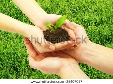 holding a plant between hands on grass - stock photo