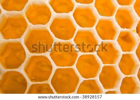 honey cells texture - stock photo