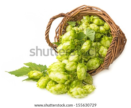 hop cones in a basket