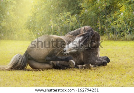 horse is resting against the background of the solar Glade - stock photo