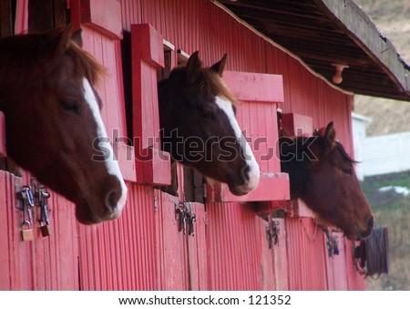 3 horses - stock photo