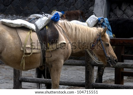 Horses at Mt. Fuji, Fuji-Hakone-Izu National Park, Japan - stock photo