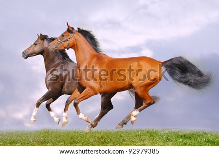 horses in grass - stock photo