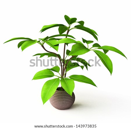 Houseplant in Ceramic Flower Pot - stock photo