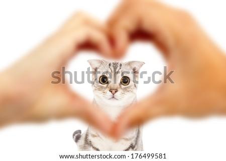 human hands make heart shape and cute cat  - stock photo