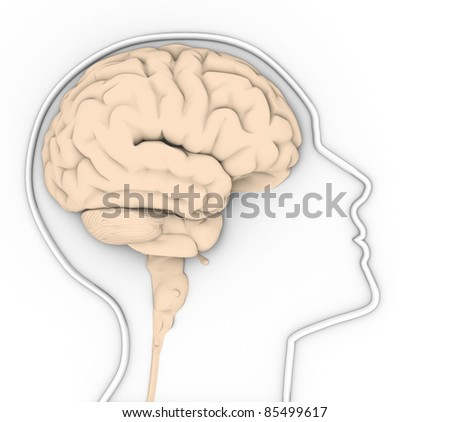 Human head with brain. This is a 3d render illustration - stock photo