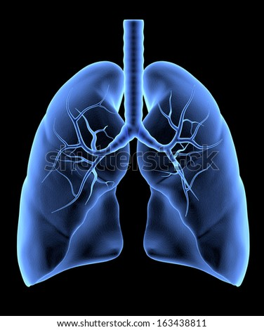 Human Lungs isolated. X-Ray effect - stock photo