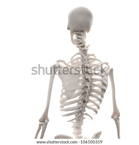 human skeleton - 3D medical illustration - stock photo