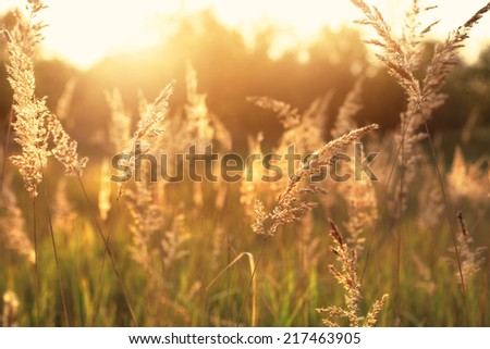 Idyllic hot summer morning on the field - stock photo