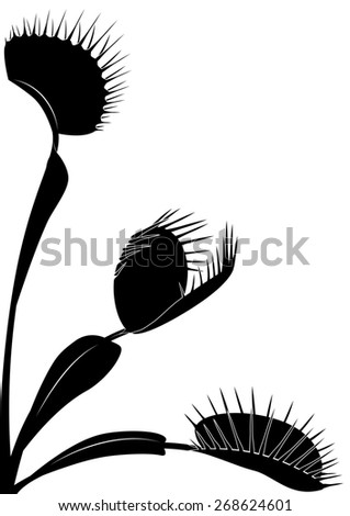 illustration of Venus flytrap in black and white colors - stock photo