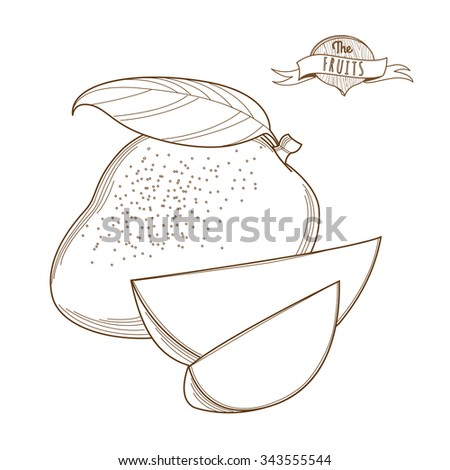 illustration outline hand drawn mango flat style thin line single mango