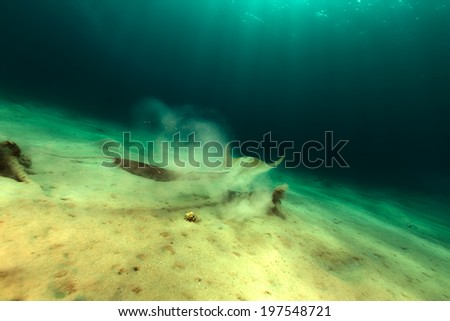 in the Red Sea - stock photo