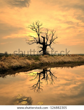 In the Swamp of - stock photo