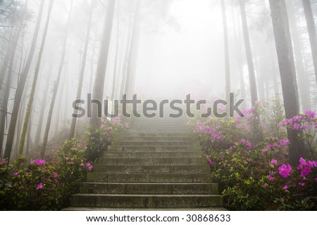 in thick fog - stock photo