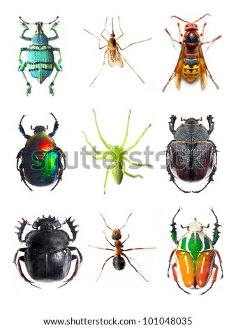 Insect collection on white background - stock photo