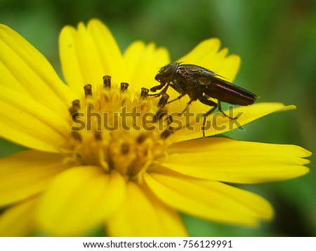 Insect island on yellow flowers