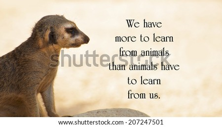 Inspirational quote about animals by Anthony Douglas Williams, with a lone Meerkat keeping watch, looking out over the desert. - stock photo