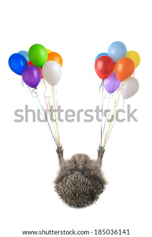 isolated hedgehog flying by balloons - stock photo