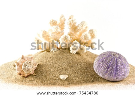 ,isolated marine coral,sea urchin and seashell on white,