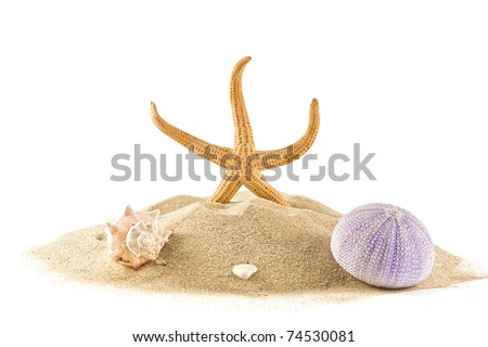 ,isolated marine star,sea urchin and seashell on white, - stock photo