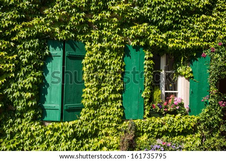 ivy covered house wall with green wood shutters, architecture, detail
