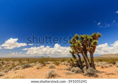 â??Joshua Tree Roadâ?? Mojave Desert (Scenic Backway) - stock photo