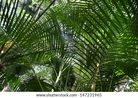 jungle with various palm trees               - stock photo