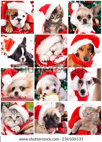 kitten and puppy with santa hats close-up portrait, set - stock photo