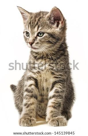 kitten sitting on a white background - stock photo