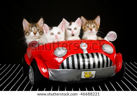 Topic des chats Stock-photo--kittens-in-soft-toy-red-car-on-black-background-46688221