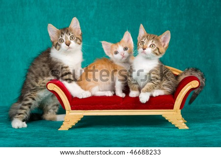 3 kittens on mini victorian couch sofa chaise on green background - stock photo