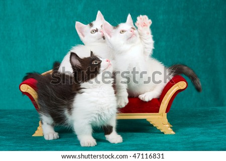 3 Kittens on miniature Victorian couch on green background - stock photo