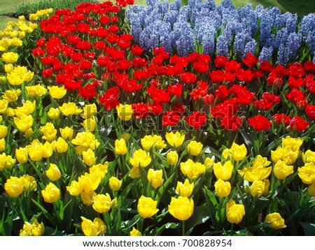 Kuekenhof famous flower garden netherlands means stock photo kuekenhof is the famous flower garden in netherlands and it means kitchen garden mightylinksfo