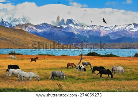 Lake Laguna Azul in the mountains. On the shore of Laguna Azul grazing horses. Magical landscape in the national park Torres del Paine, Chile - stock photo