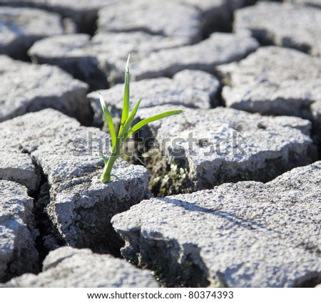 land with dry cracked ground - stock photo