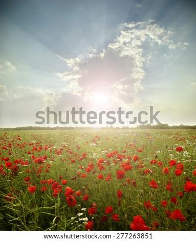 landscape poppy flowers in the sky - stock photo