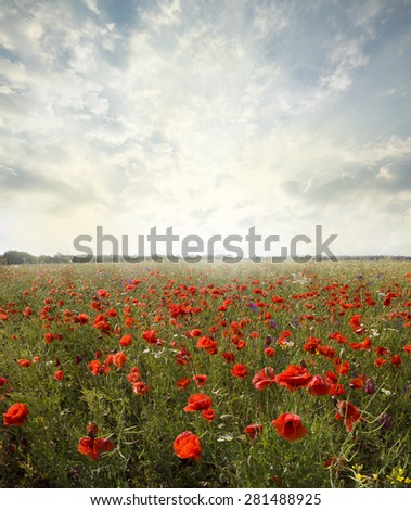 landscape poppy flowers in the sky - stock photo