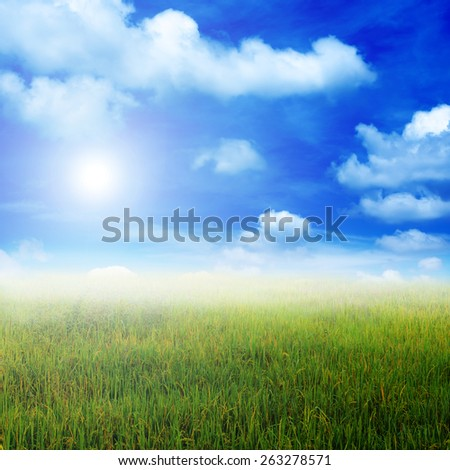 landscape  rice field plantation farming in morning sunrise - stock photo